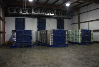UGM Force Air Cooling System Tunnels Bifulcos Farms Bifulco Tall Boy Brand Pittsgrove New Jersey USA